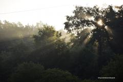 Licht-durch-Baum